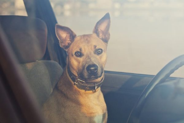 It takes just six minutes for a dog to die in a hot car