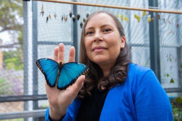 Flying colors: Researcher reveals hidden world through the eyes of butterflies