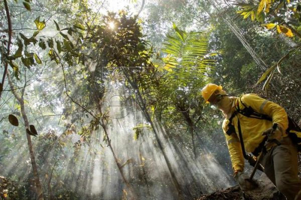 Amazon fires: eight ways you can help stop the rainforest burning